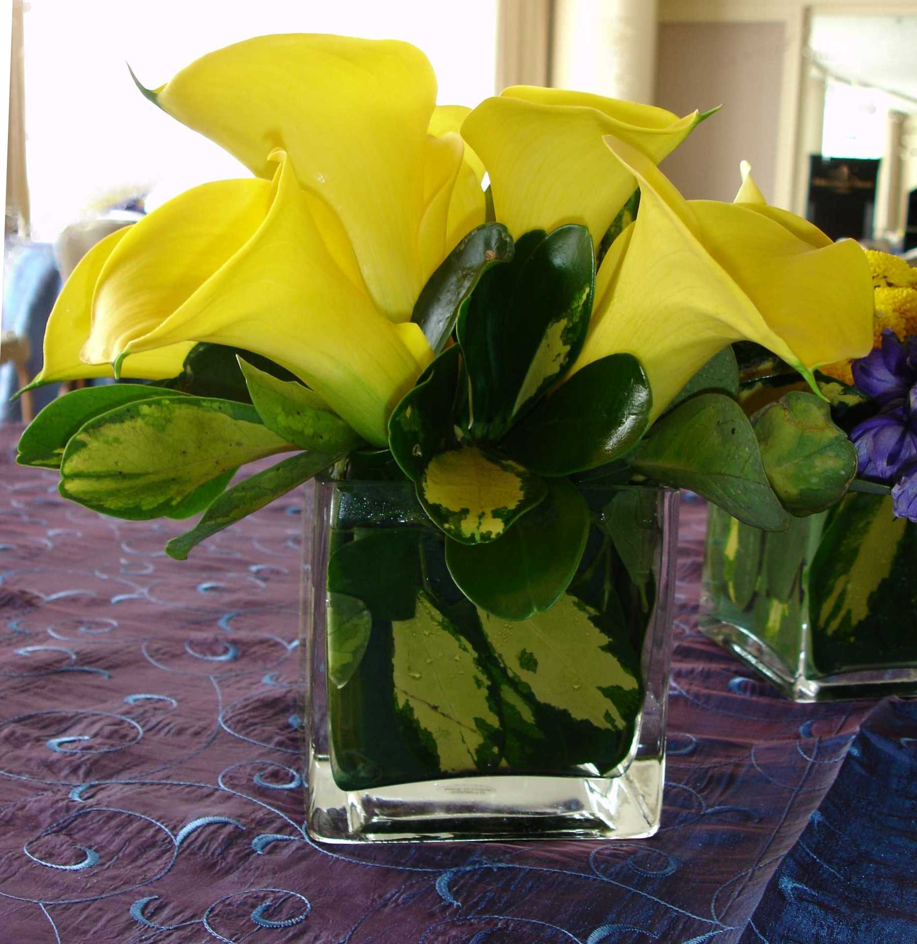 Yellow calla lily in square glass vase advantage destination and yellow calla lily in square glass vase dhlflorist Images